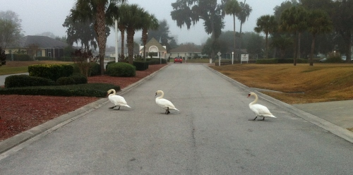 This was our roadblock Thursday morning on the way to deliver a Weight Watchers meeting in a local gated community.