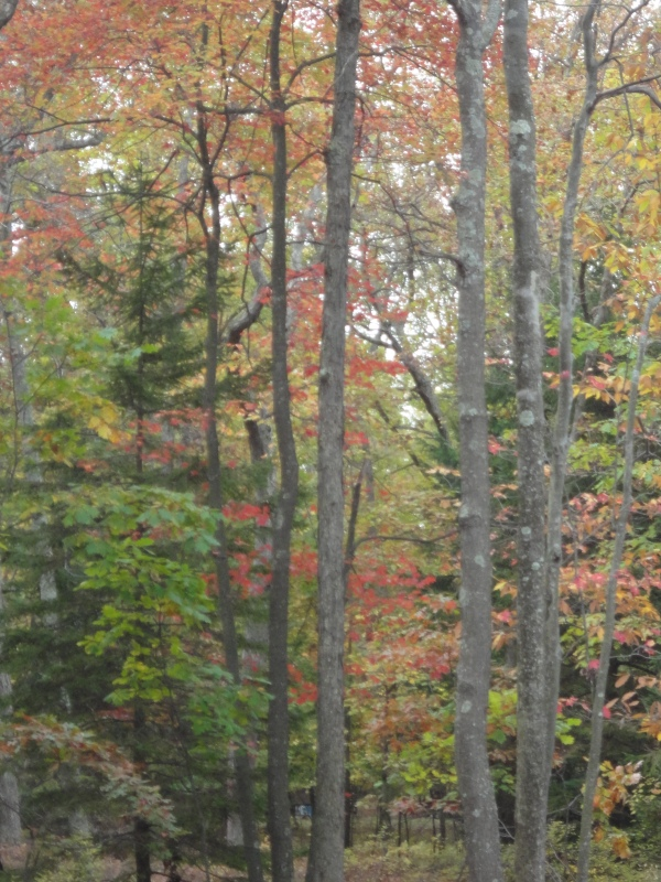 ...our backyard at the cabin this year...