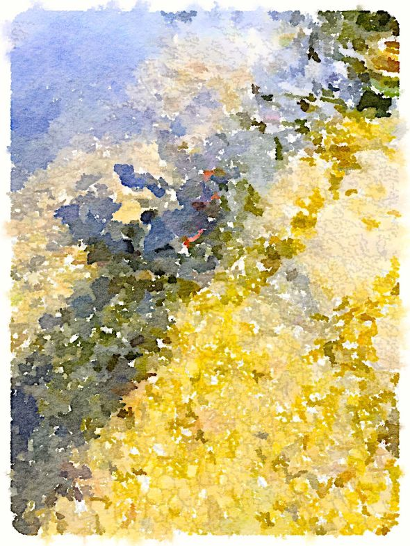 Painted in Waterlogue-Koi