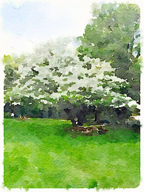 Painted in Waterlogue - Dogwood