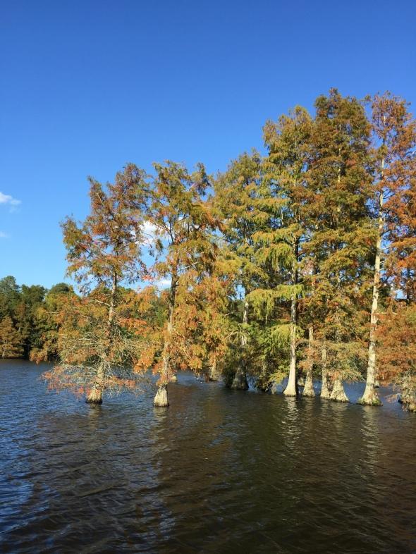 Pontoon boat ride @ Trap Pond on a Thursday? Sure!